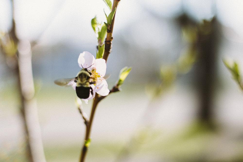 CherryBlossoms+Momo_05042018_021.jpg