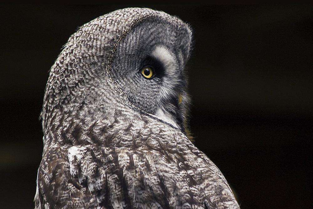 OwlCentre_01.jpg