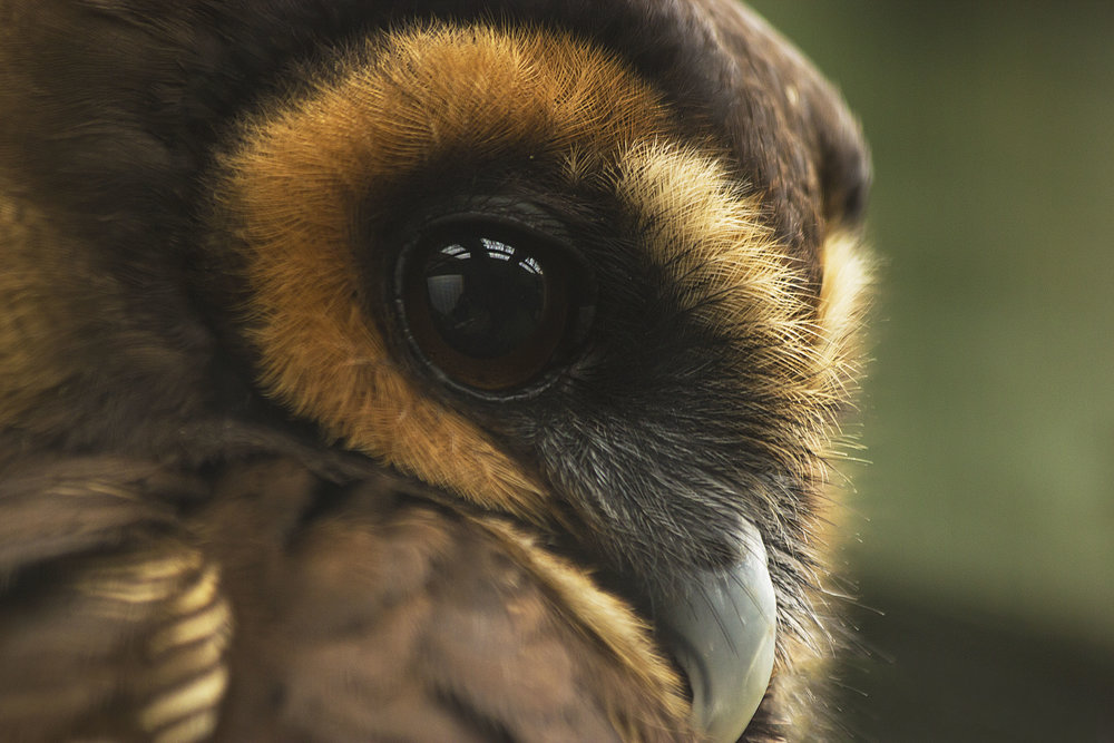 OwlCentre_14.jpg