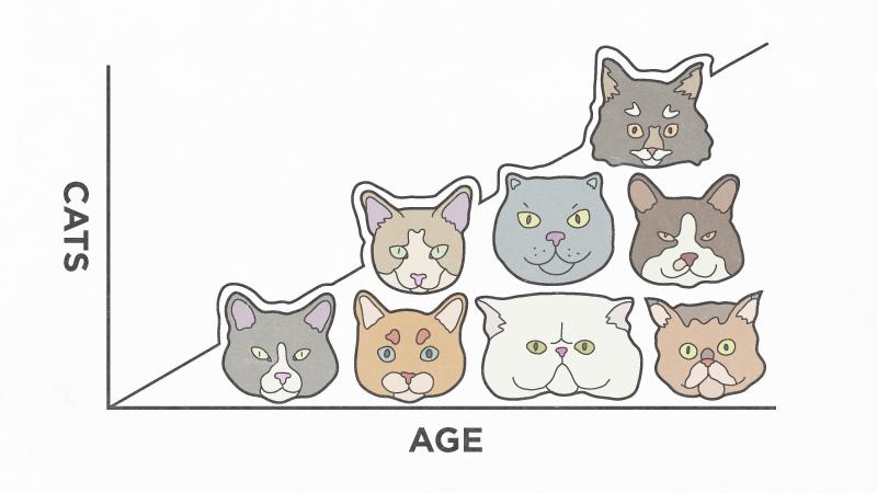moreagemorecats.png