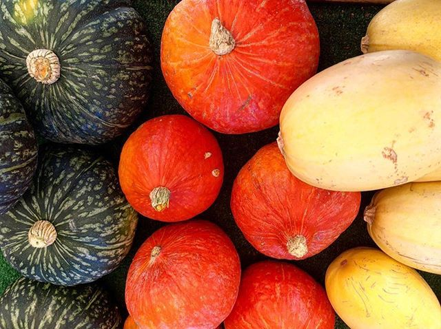 Ever tried Red Kuri squash? Here's your chance! This fall feature can be added to soups, risotto, stews, and curries, grated and baked into gratins or casseroles, and is ideally sized to be halved, hollowed, stuffed, and baked! #redkurisquash