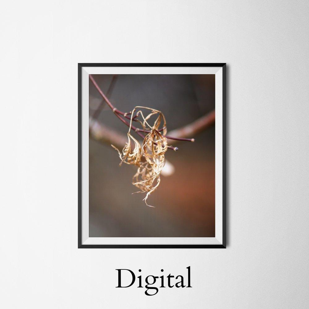 Digitalphoto_Portfolio.jpg