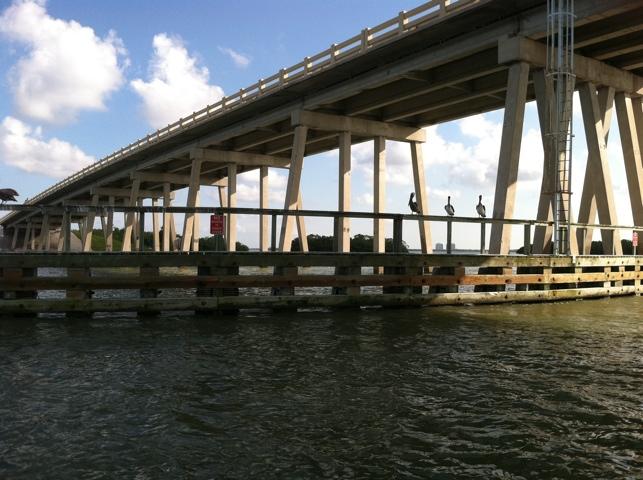 Pelicans on Bridge