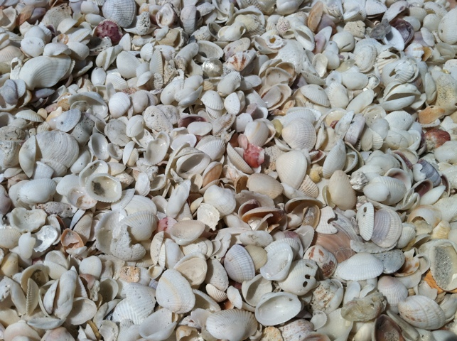 Millions of Seashells