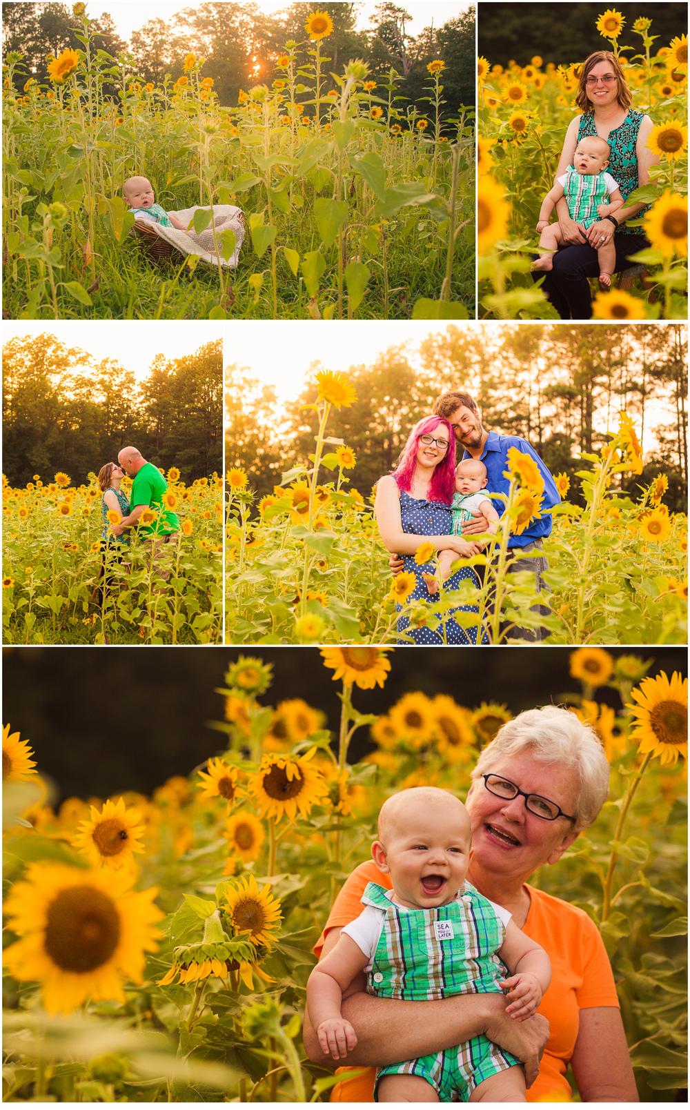LSunflower.jpg