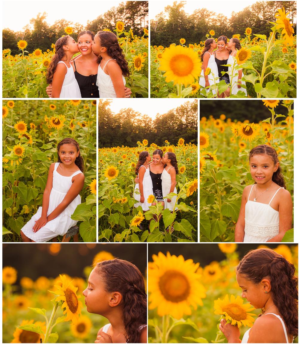 KSunflower.jpg