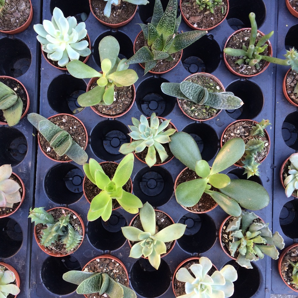 Succulent sights at Union Square Greenmarket