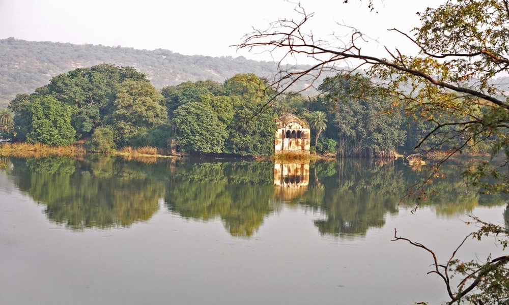 india_ramthambore.jpg