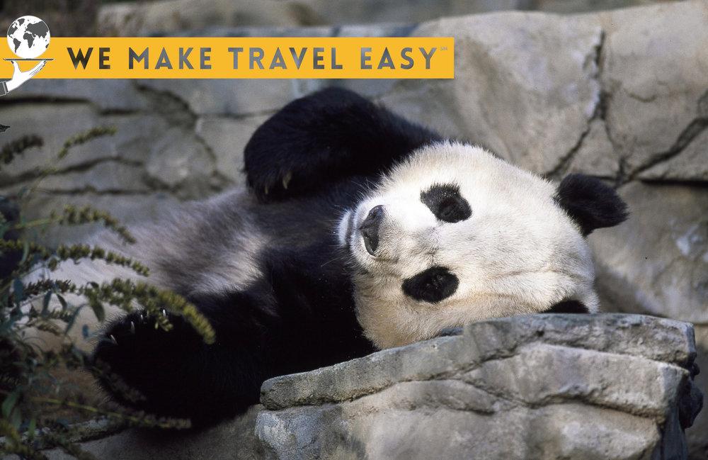 panda-1594138 copy.jpg