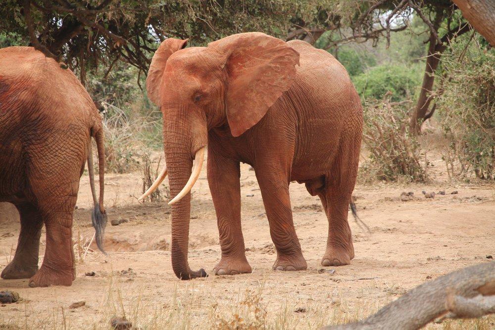 elephant-192917.jpg
