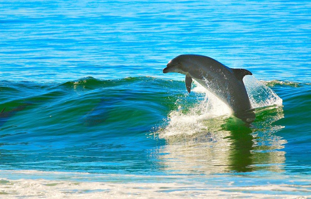 dolphin-1679468.jpg
