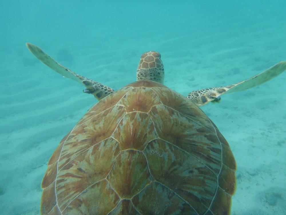 turtle-1179660.jpg
