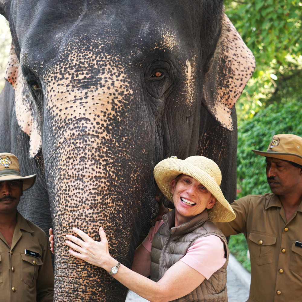 yelp elephant.jpg