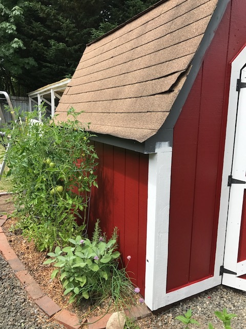 Shed to Mini Barn Remodel