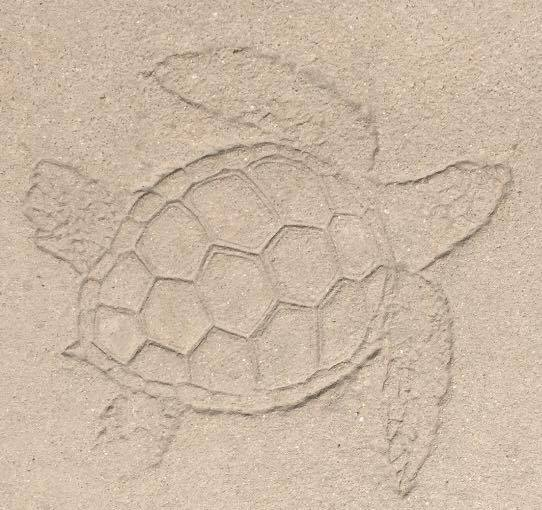 Concrete Turtle Stamp Outside the Aquarium