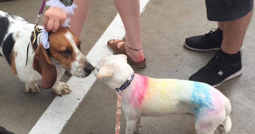Another full color picture - Luna was a star of the day because of her beautiful colors! Rainbow by Abby :)