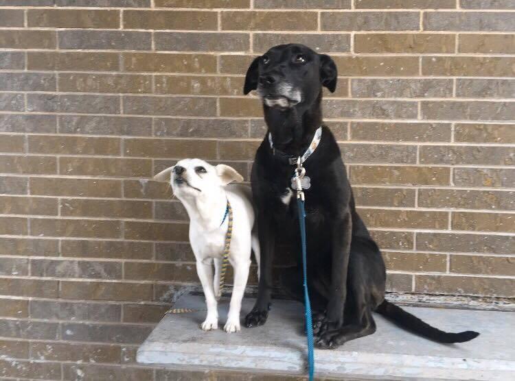 Luna and Joy at the rest stop near York Nebraska