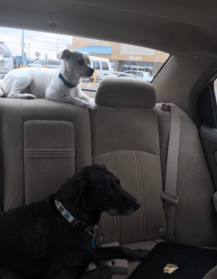 One of us was always in the car with Joy and Luna. These were their preferred waiting spaces.