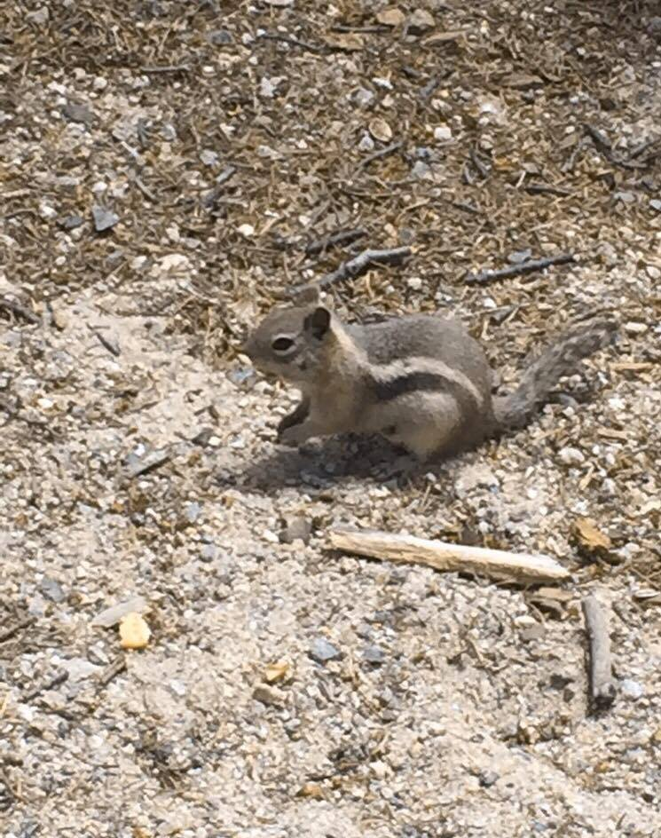 Chipmunks everywhere! They are so cute!