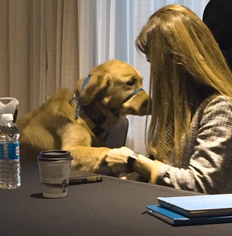 "At a dvm360 leadership meeting. Dr. Robin Downing's sweet dog Kula (Hawaiian for ""gold"") was instant best friends with Dr. Dani McVety of Lap of Love."