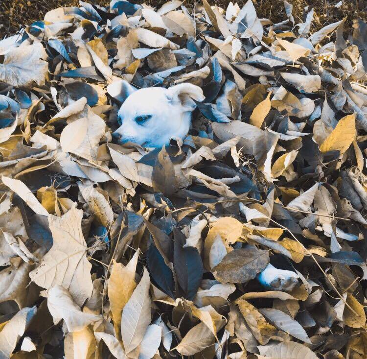 Luna in the leaf pile