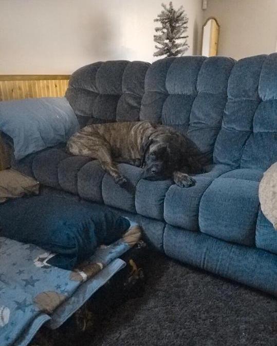 Jax resting at home