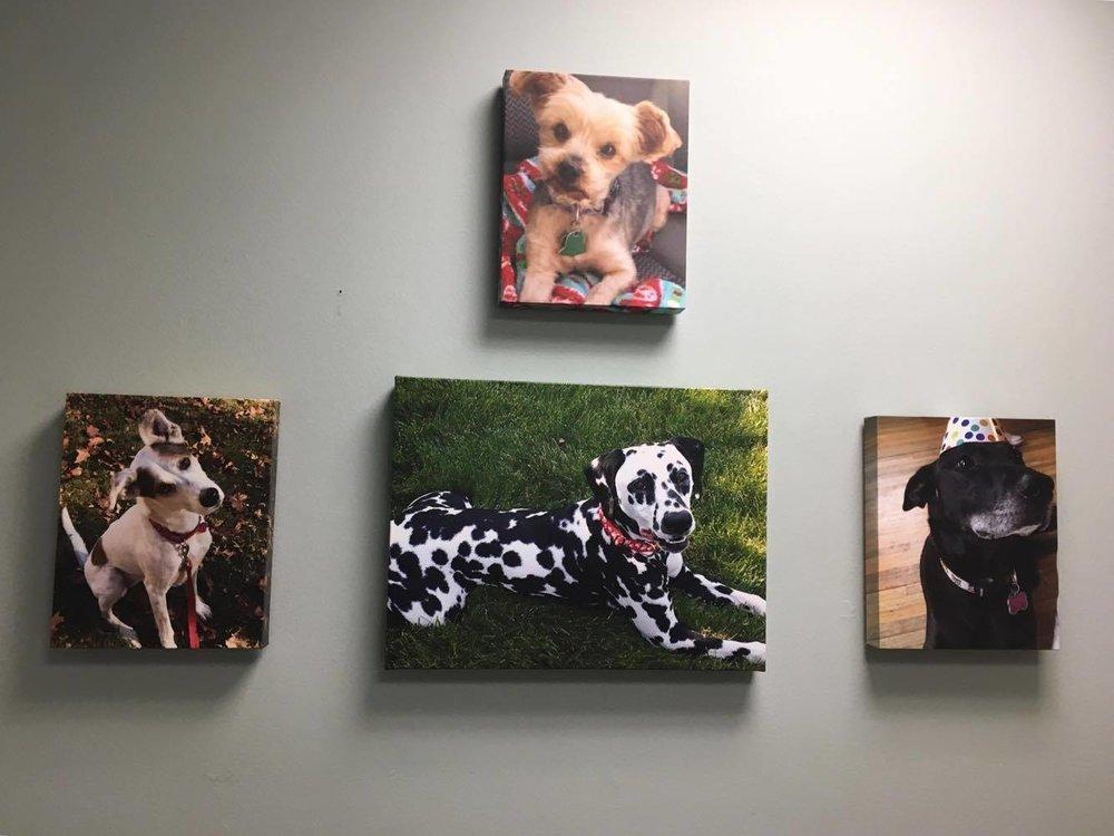 Top: Phoenix (Stephanie Marshall), Bottom, left to right: Rosie (Kristen Heckman), Pyro (Kelly Turley), Joy the Puppy (me!) :)