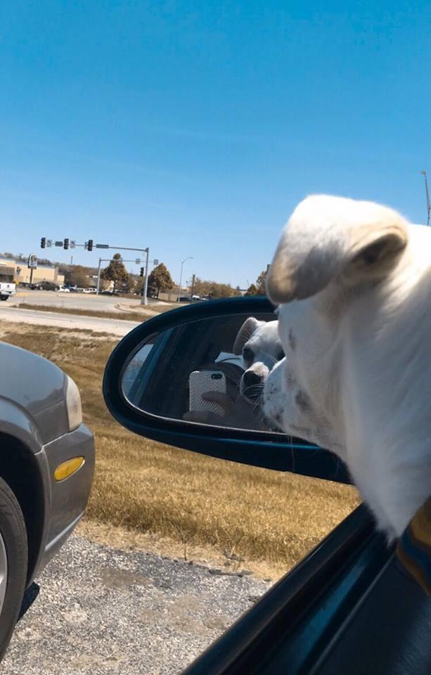 Joy and Luna love road trip adventures!