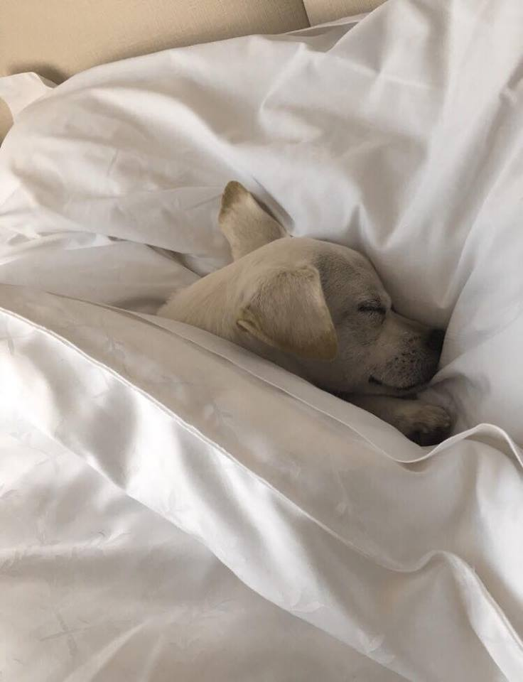 Good night Luna!
