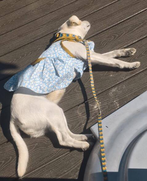 Being told you look fabulous in your dress all day is nice but exhausting.