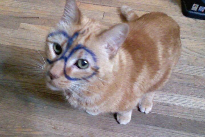 Max the Cat as Harry Potter