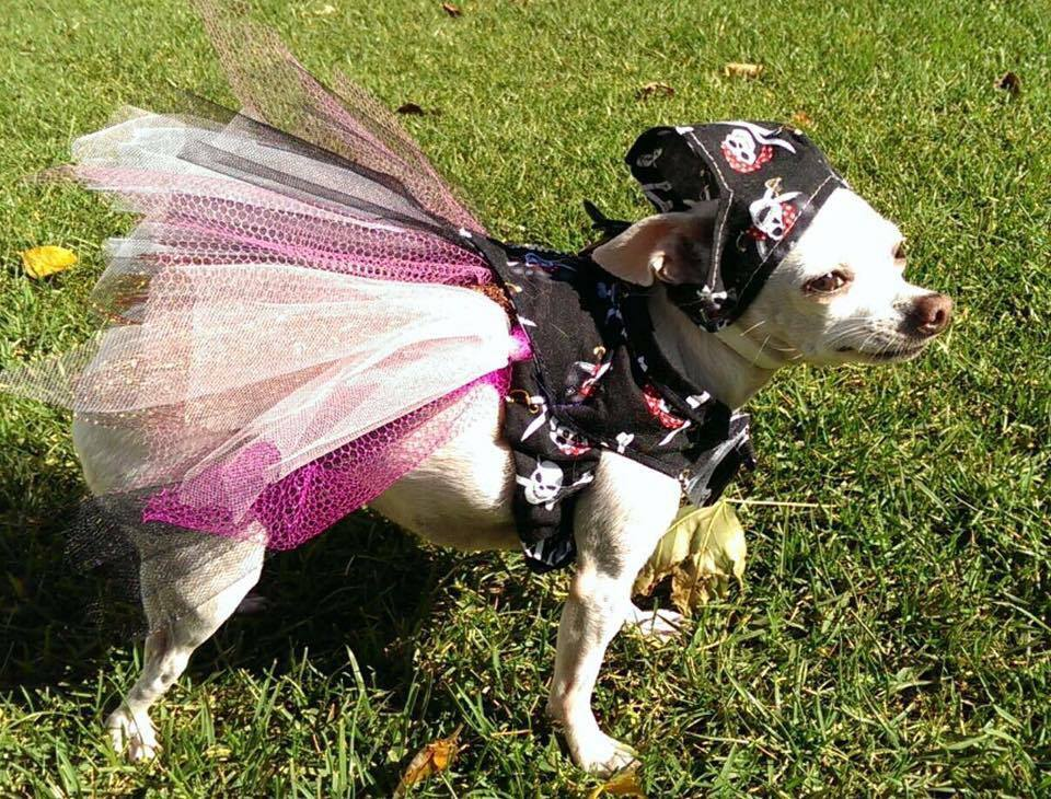 Olive the Pirate, you are ever cute! Thank you Kim Halligan Garrison!