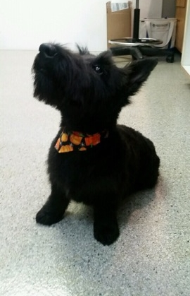 Baby Piper, you are also gorgeous in black and orange!