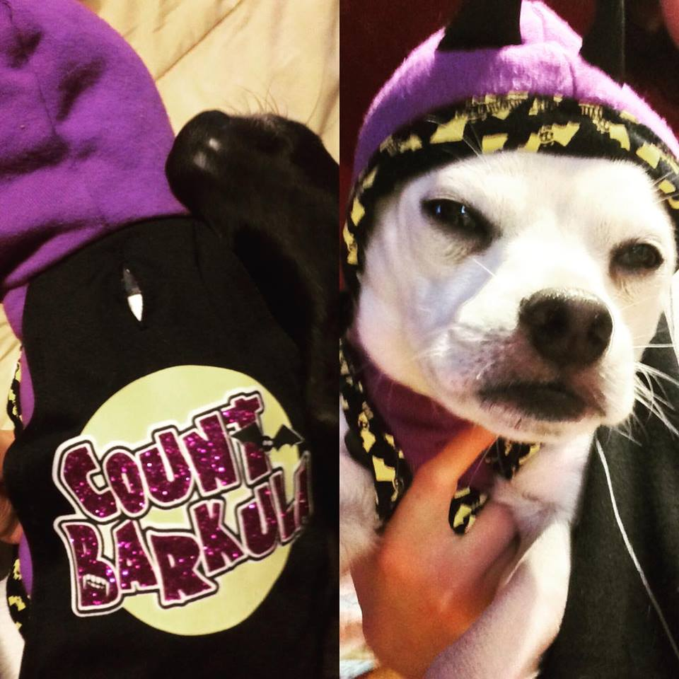 Luna is...Count Barkula!