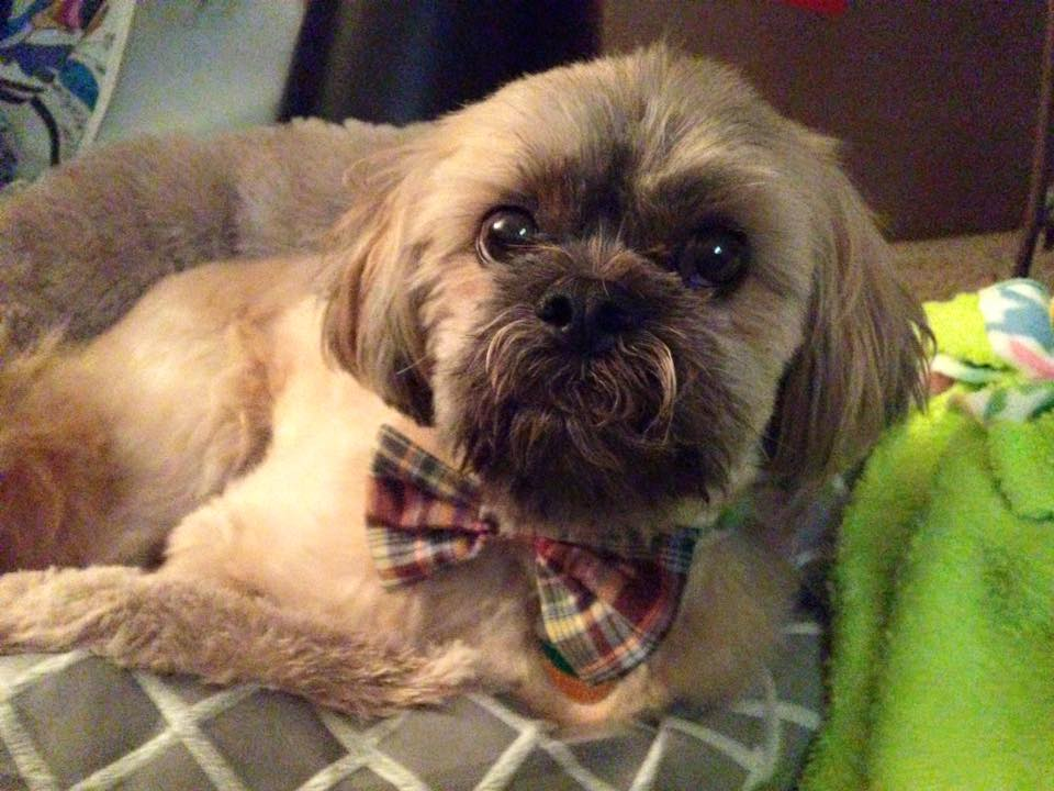 Gulliver, you always look handsome in a bow tie!