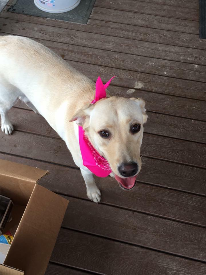 Lucy, you look as beautiful as always in your bandana!
