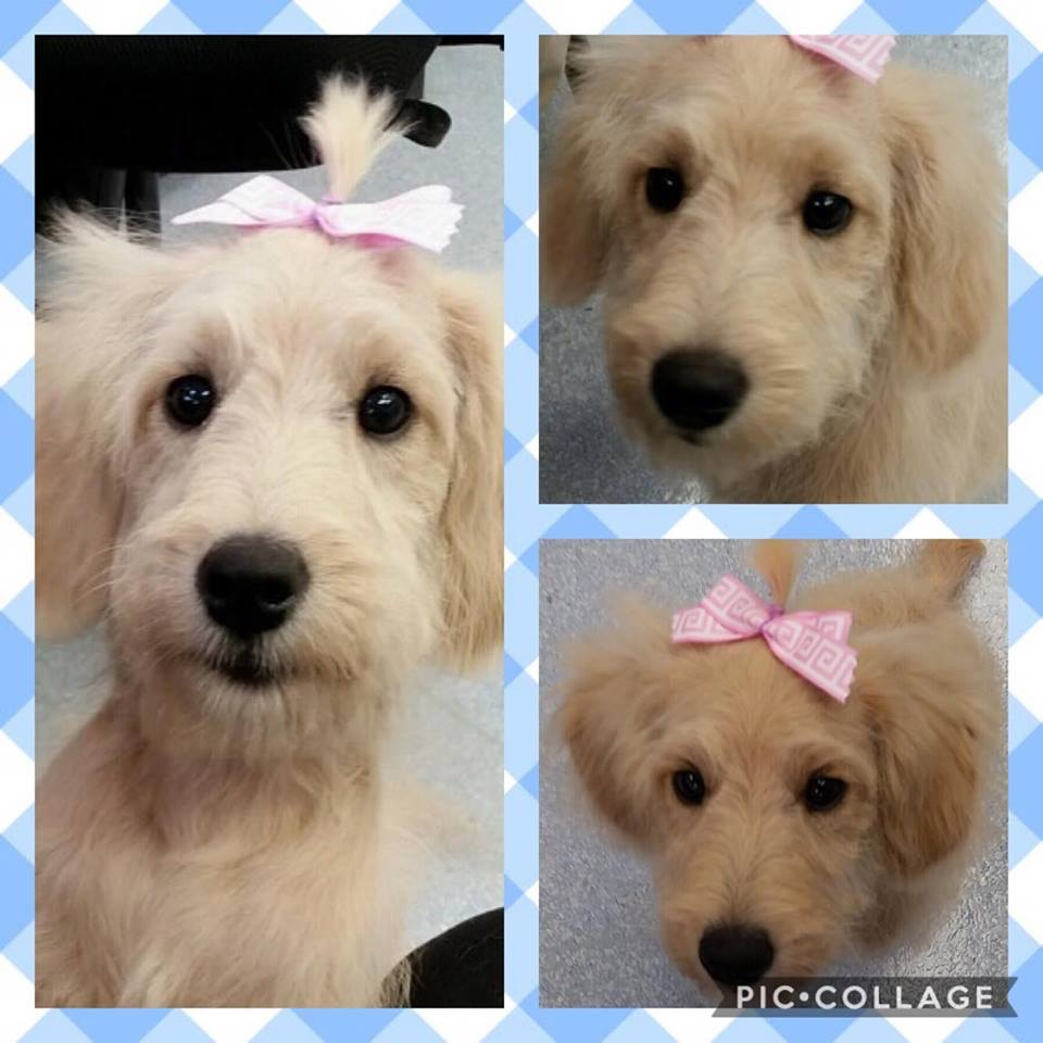 Oh Lucy! Yes of course a bow counts as a costume sweet pup!