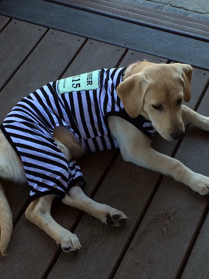 Lucy the Jail Bird-Dog. Thank you Cindy Choi!