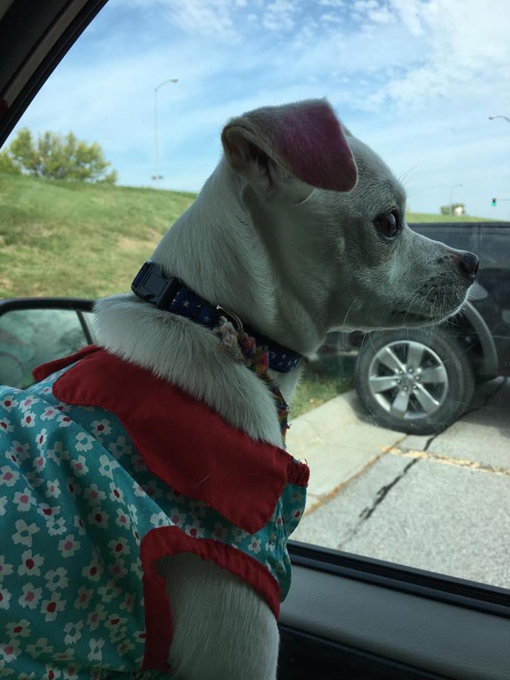 Luna dressed up as a dog in a dress!