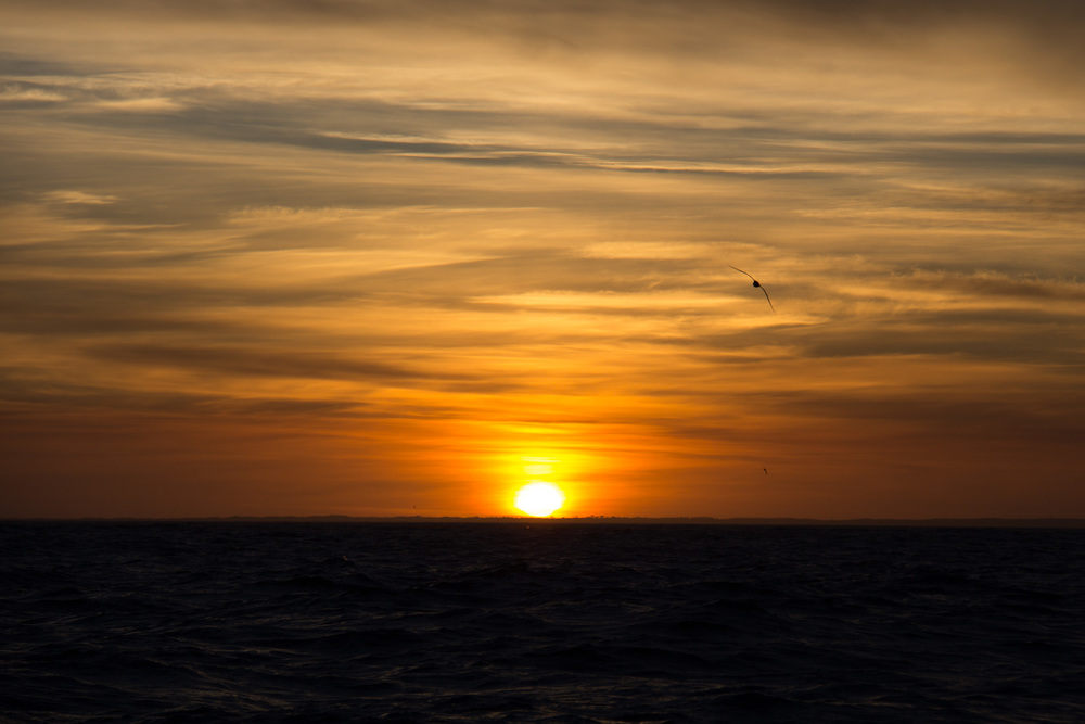 An Albatross at dawn as we approached Robe.