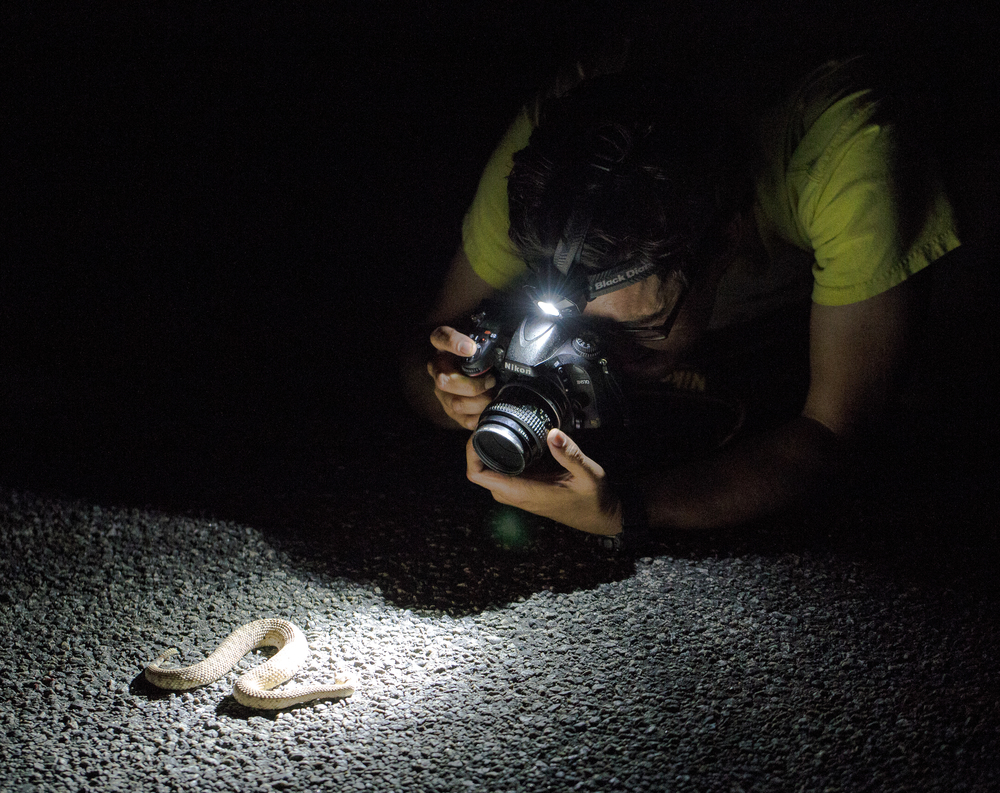 Tony Iwane photographing a Mojave sidewinder (Photo by Ken-ichi Ueda)