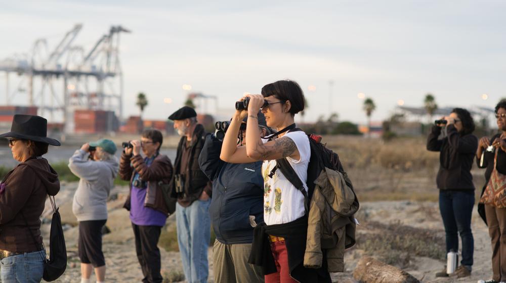 Constance Taylor observes a Northern Shoveler (Anas clypeata) duck. (Tony Iwane)