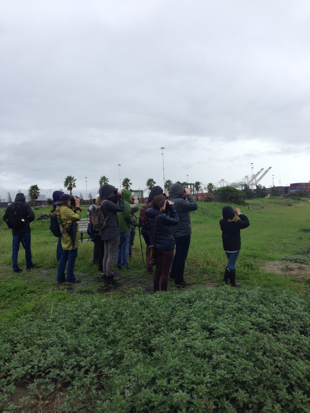 Birders at Middle Harbor Shoreline