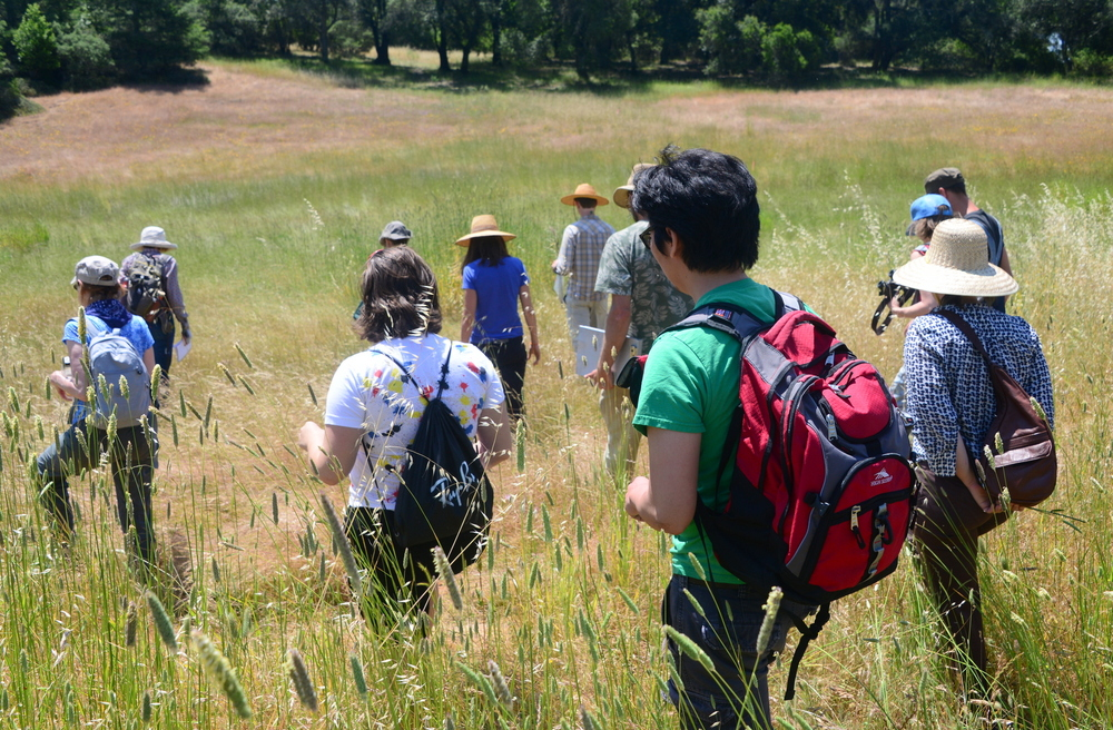 Walking the untilled field