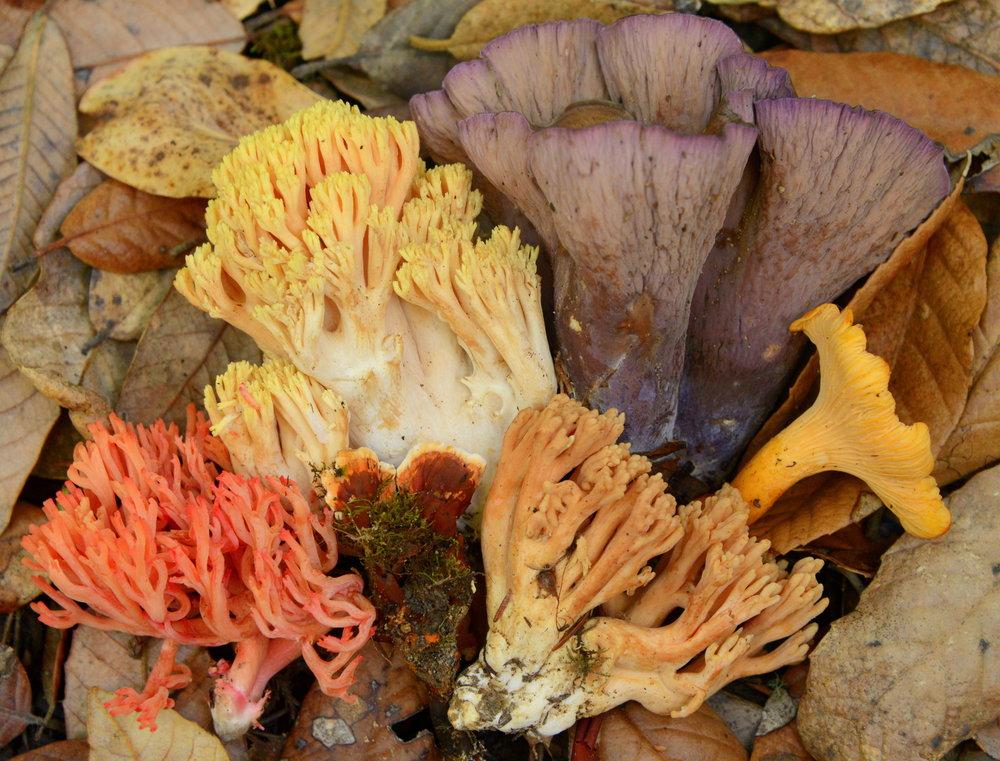 Fall fungus by Damon Tighe