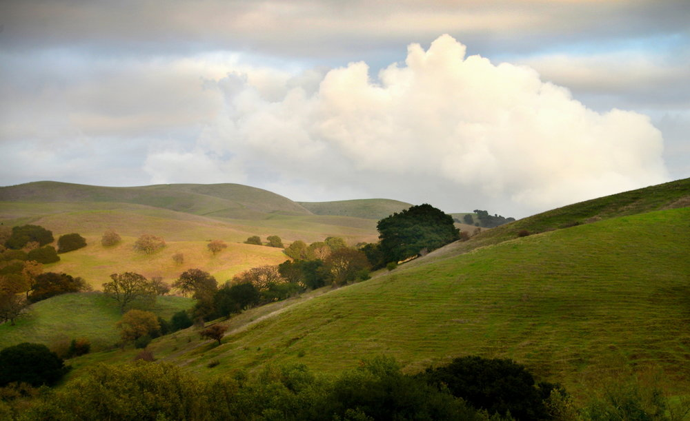 The Fernandez Ranch rolling hills and oak filled ravines