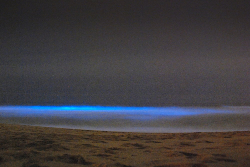 Bioluminescent waves, San Mateo. Photo by Damon Tighe