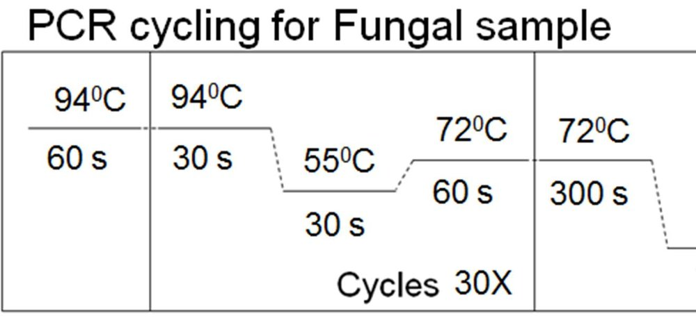 PCR cycle.jpg