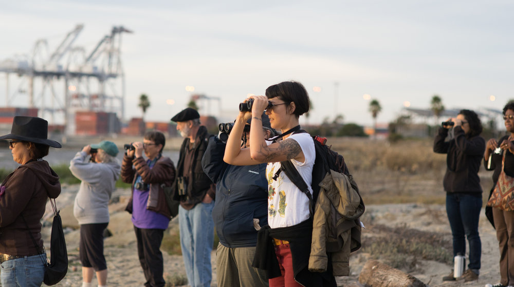 Birders checking out the feathered denizens of Middle Harbor Shoreline Park at a past CCNH bird walk. Photo by Tony Iwane.