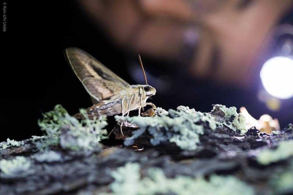 person and sphinx moth horizontal.jpg